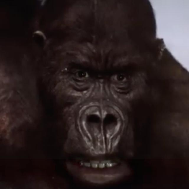 Ein Tierfilm der viral geht?