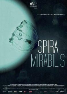 Spira Mirabilis