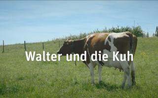 """HAFL Spot """"Walter und die Kuh"""""""